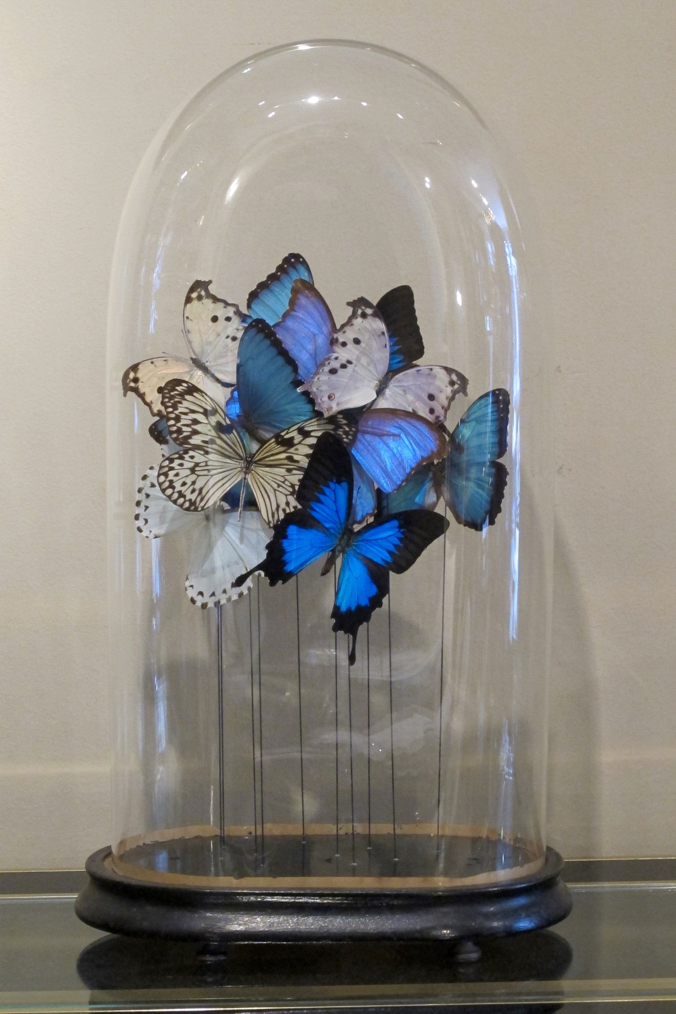 Butterflies in a Antique Bell Jar