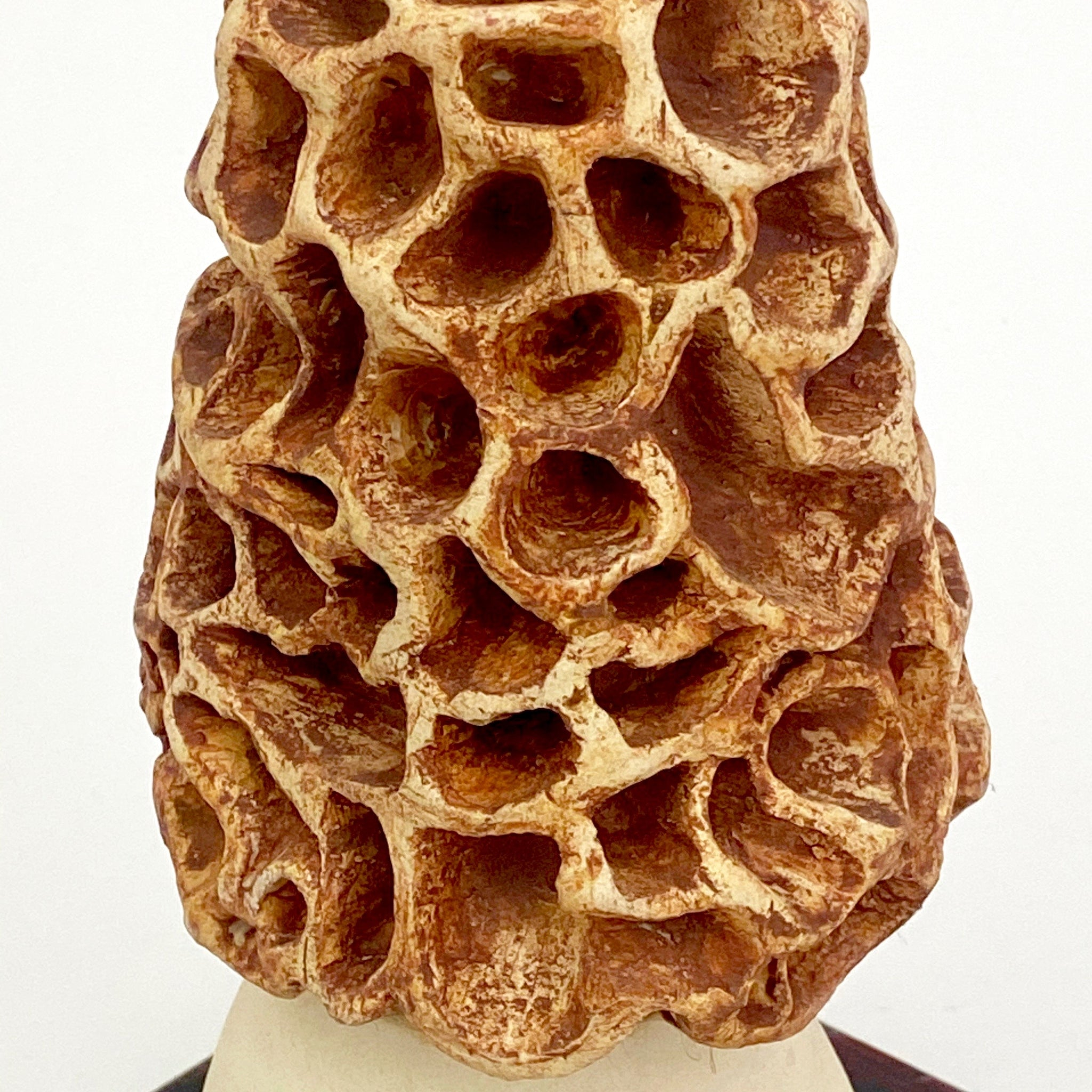 Large hand modelled Ceramic Morel Mushroom.