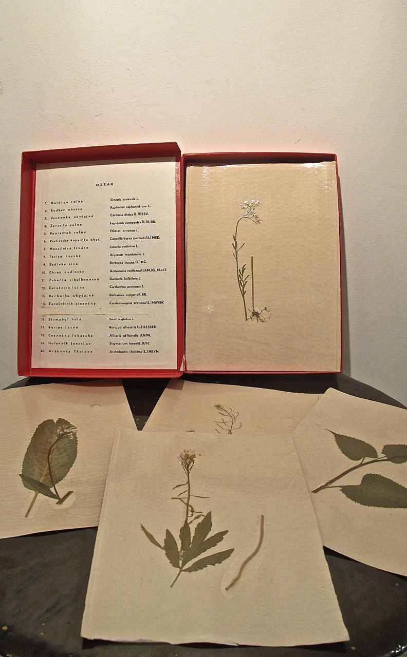 A boxed set of scientific studies of grasses (20 in total).