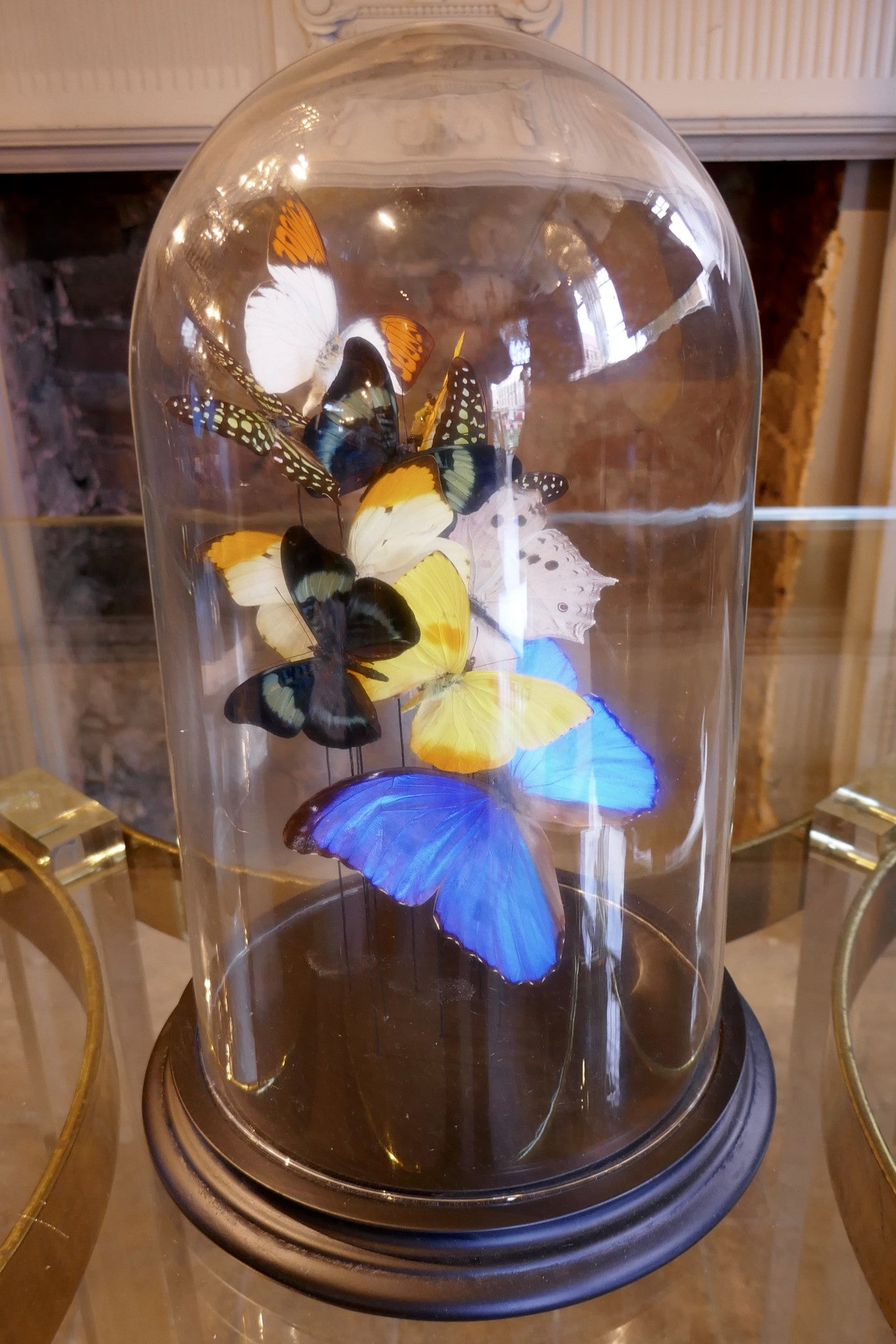 X Butterflies in Bell Jar