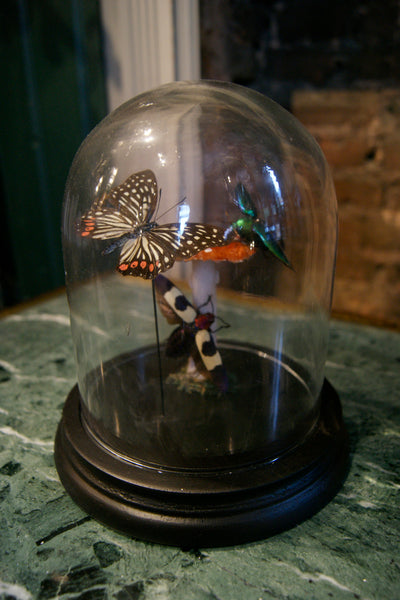 X Small Handmade Butterfly Dome
