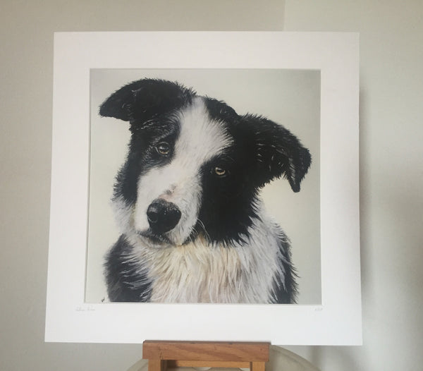Border Collie Portrait Fine Art Giclee Print