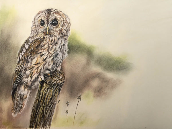 Tawny Owl Original Painting - SOLD