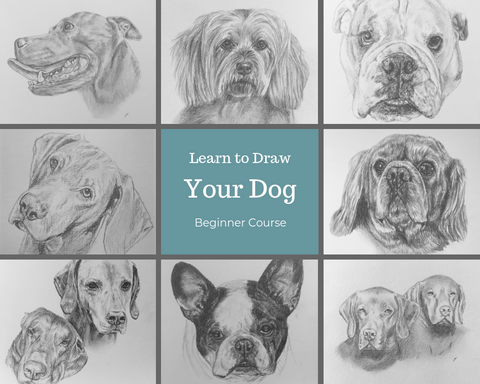 Pay Weekly. Learn to Draw your Dog - Beginner Course