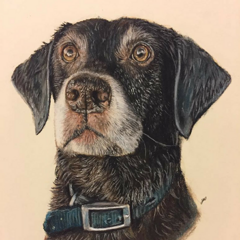 Order a Pet Portrait in Pastel