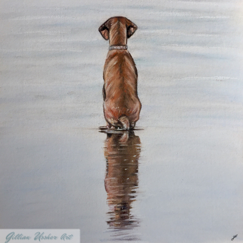 Reflection. Hungarian Vizsla Fine Art Archival Mounted Print