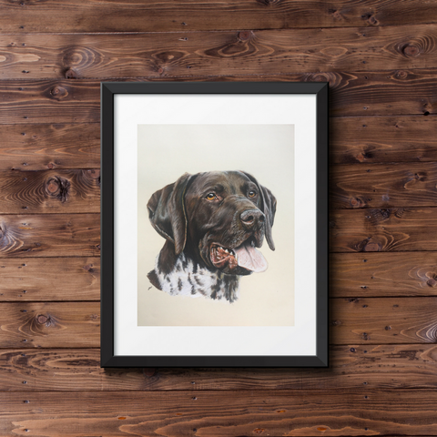 German Short Haired Pointer Portrait Fine Art Giclee Print