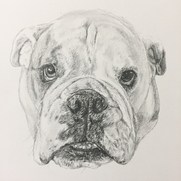 Learn to Draw your Dog - Beginner Course