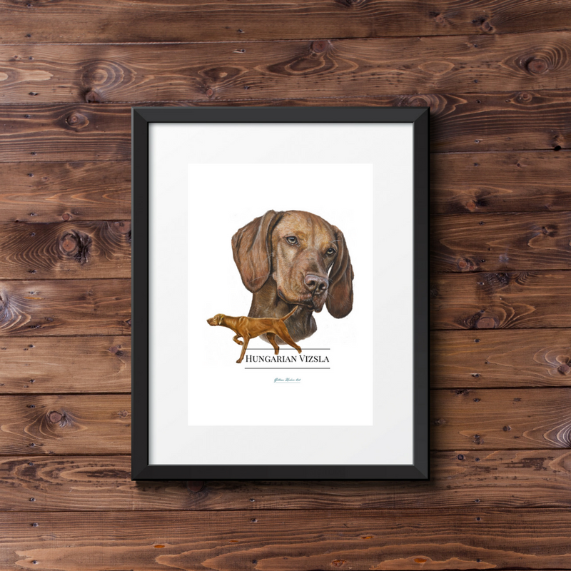Hungarian Vizsla Artwork Fine Art Print