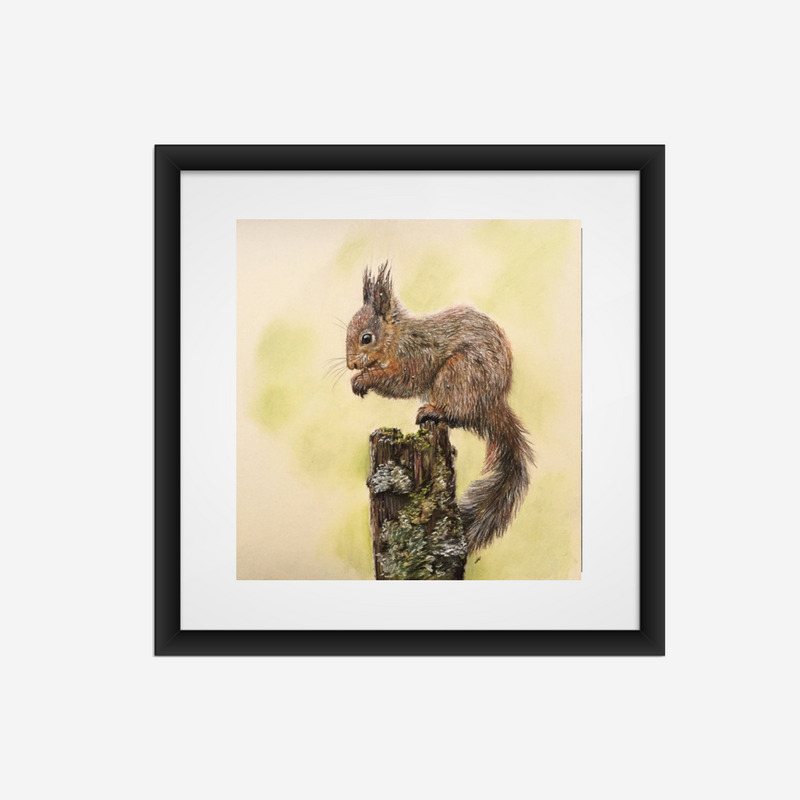 Red Squirrel Fine Art Print