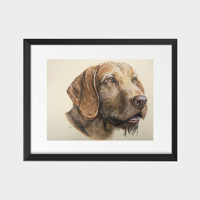 Hungarian Wirehaired Vizsla Fine Art Print