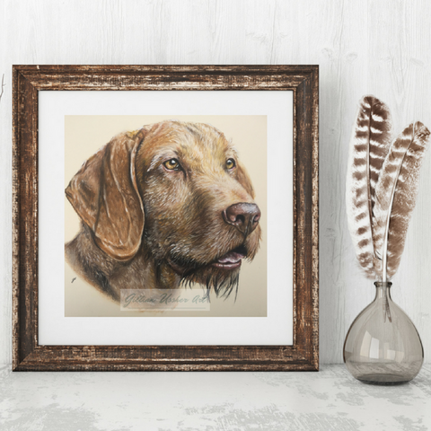 Hungarian Wirehaired Vizsla Portrait Fine Art Giclee Print