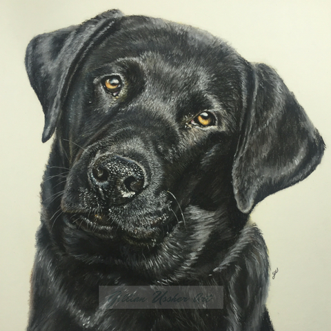Black Labrador Original Pastel Painting