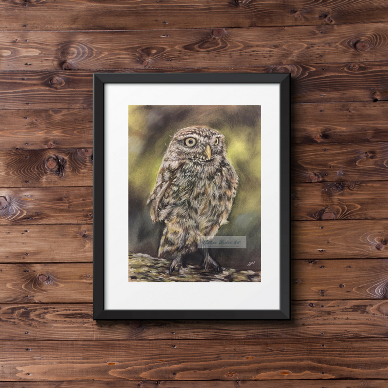Little Owl Fine Art Print