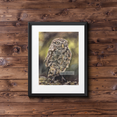 Little Owl Fine Art Giclee Print.