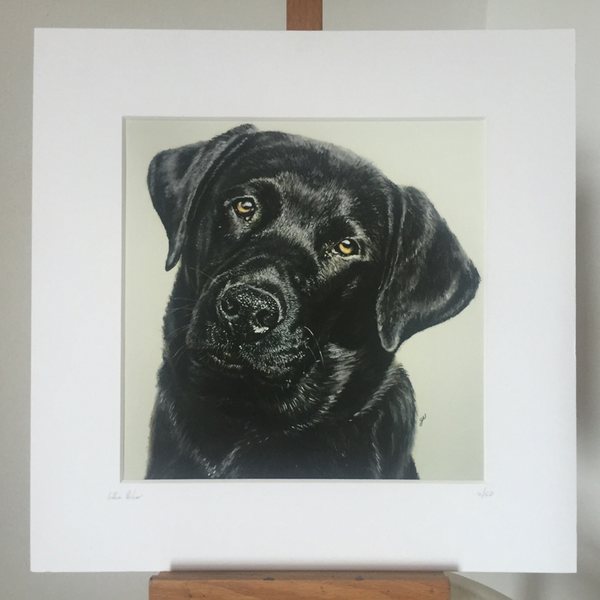 Black Labrador Retriever Fine Art Giclee Print