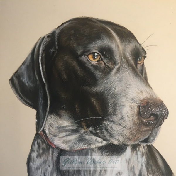 German Short Haired Pointer 'Bailey' Fine Art Giclee Print