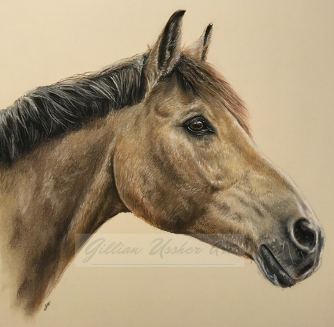 Order a Horse Portrait in Pastel