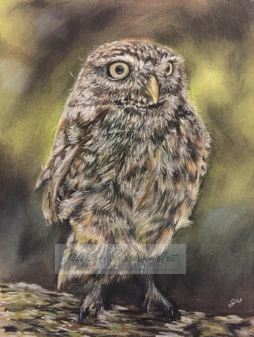 Little Owl Original Pastel Painting