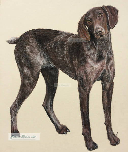 German Short Haired Pointer 'Maggie' Fine Art Giclee Print
