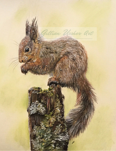 Red Squirrel Original Pastel Painting - SOLD