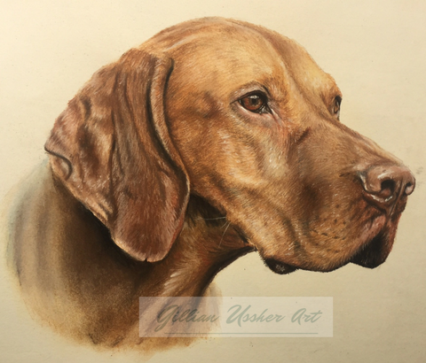Commission a pastel portrait