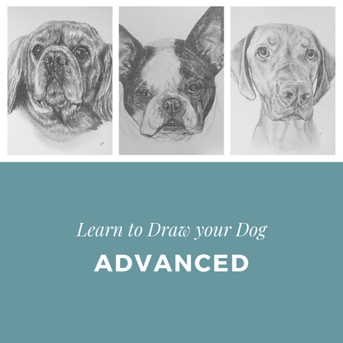 Learn to Draw your Dog - Advanced