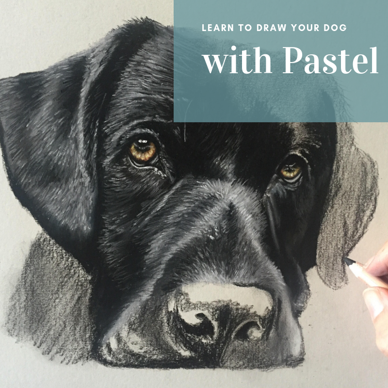 Learn to Draw your Dog with Pastel