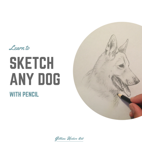 Learn to Sketch any Dog