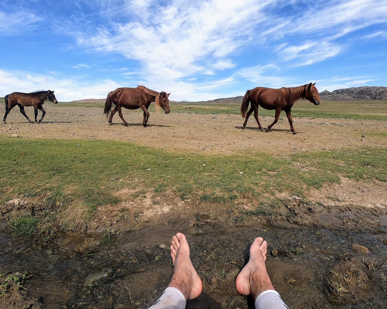 Max and wild horses in the Gobi desert, Mongolia