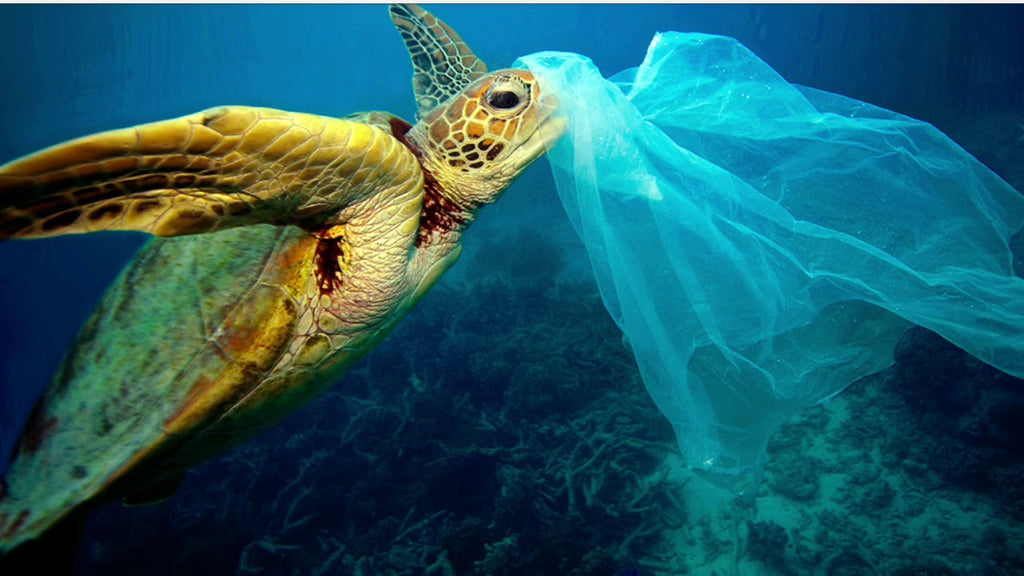 Ocean plastic pollution turtle