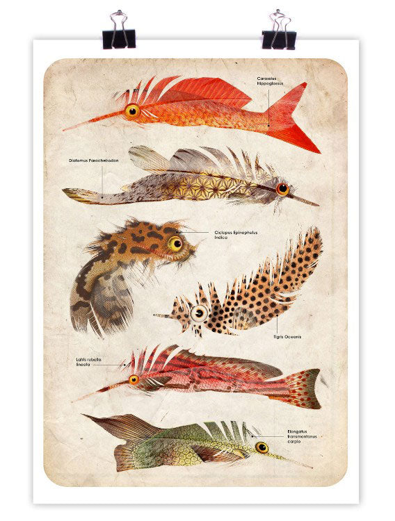 Featherfish Art Print by PlazmaLab
