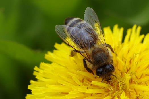 Honey Bees Need Our Help