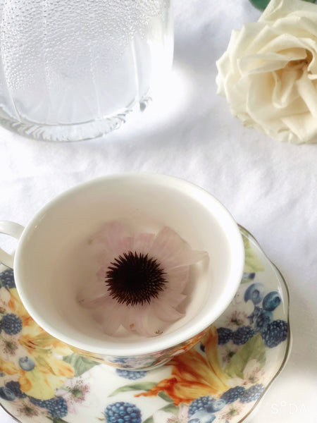 Organic Echinacea Flower Tea - Caffeine-Free Herbal Tea