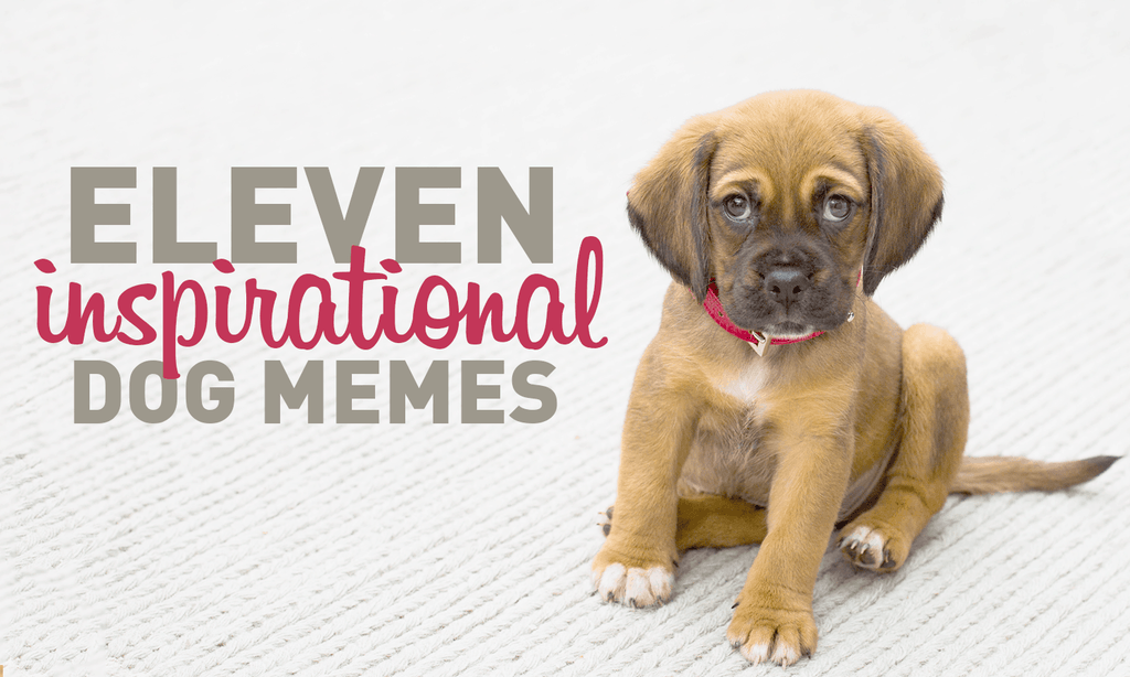 11 inspirational dog memes my cinema lightbox