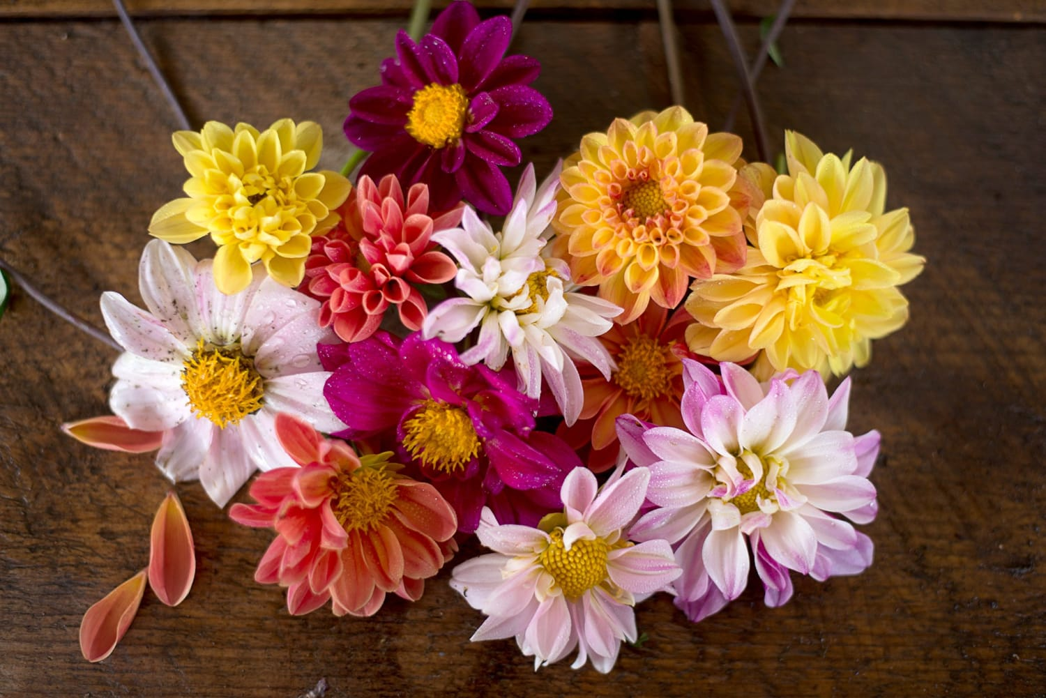 Divine Dahlias: How to Grow These Garden Divas, From Seeds to Winter Storage