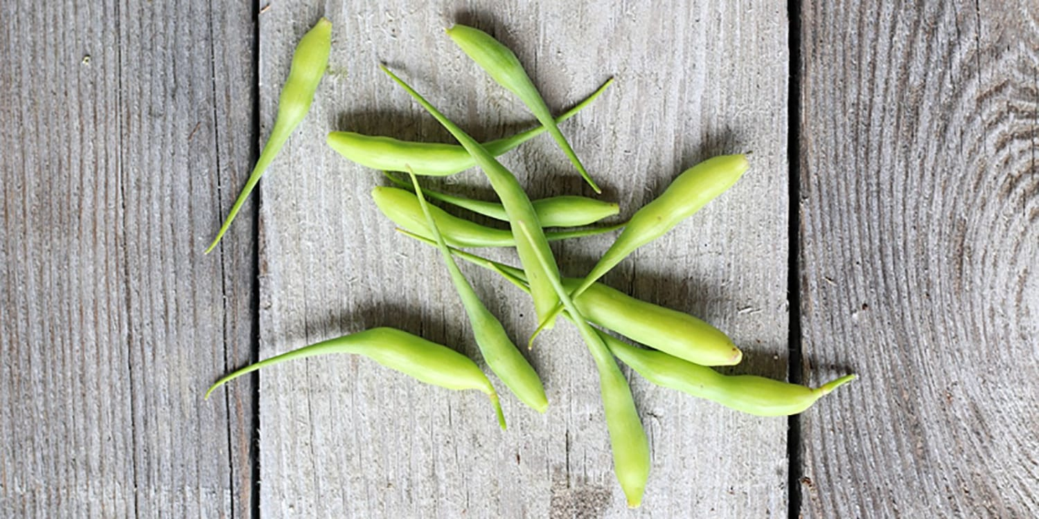 Radish Pods: What to do When a Good Radish Goes to Seed