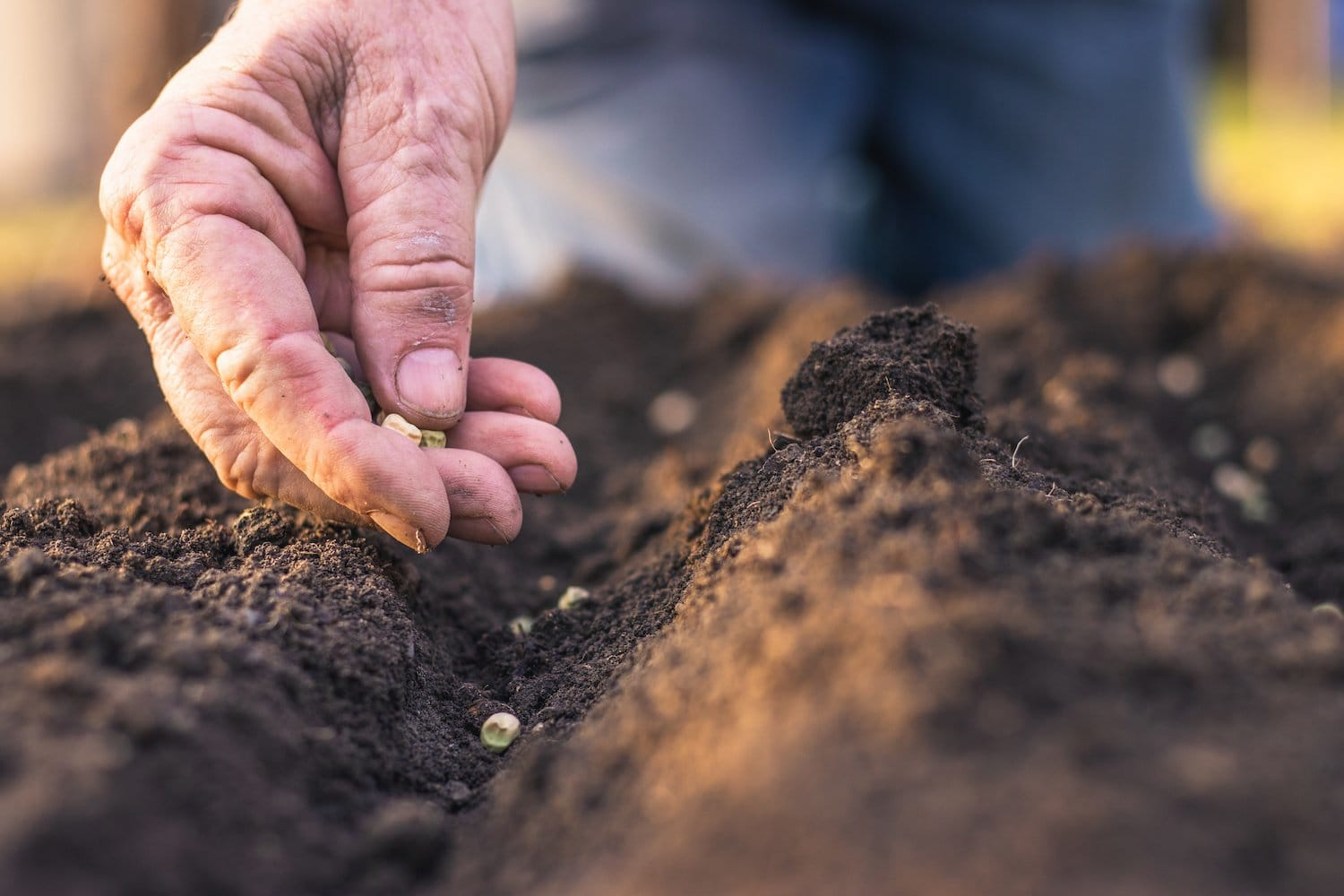 Bigger Harvests with Less Space: Make the Most of Your Garden Succession Planting