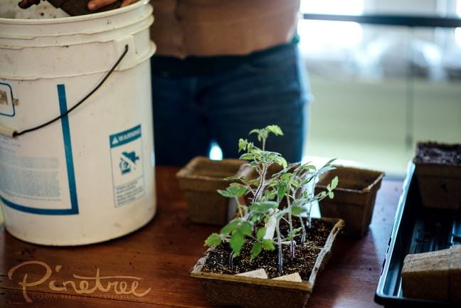 Transplanting Seedlings - Gardening Knowledge for Backyard Gardeners