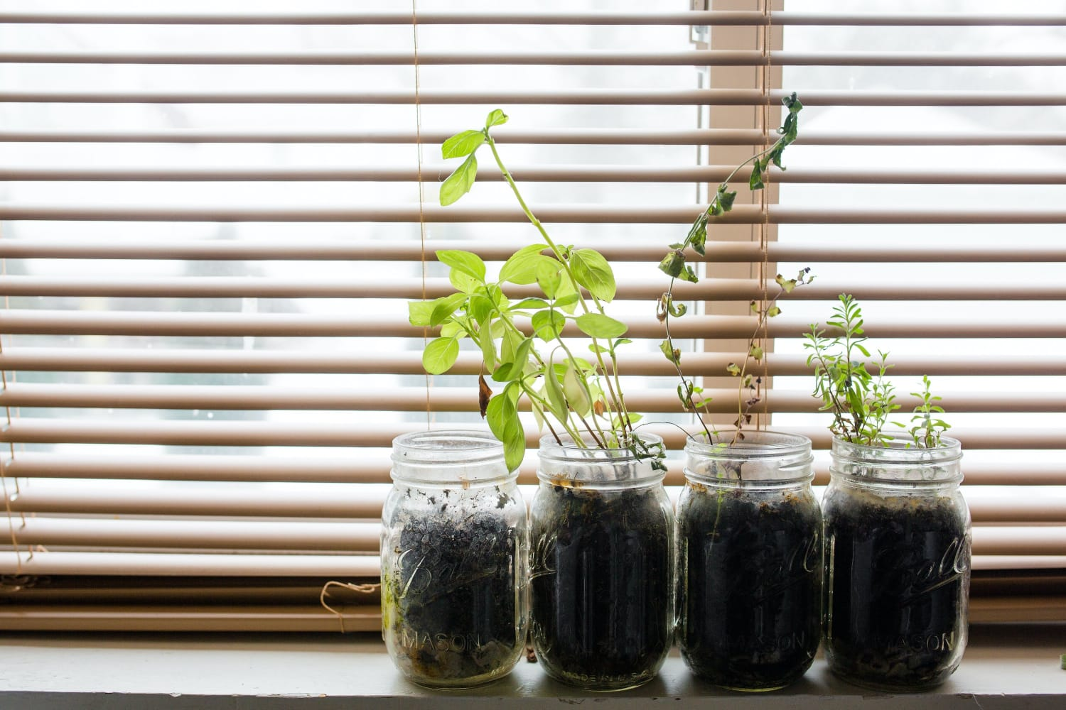 Windowsill Wonders: Small Pots, Little Effort, Big Benefits
