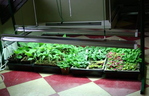Jump start grow lights with plants