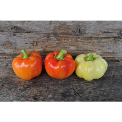 Alma Paprika Pepper (70 Days) - Vegetables