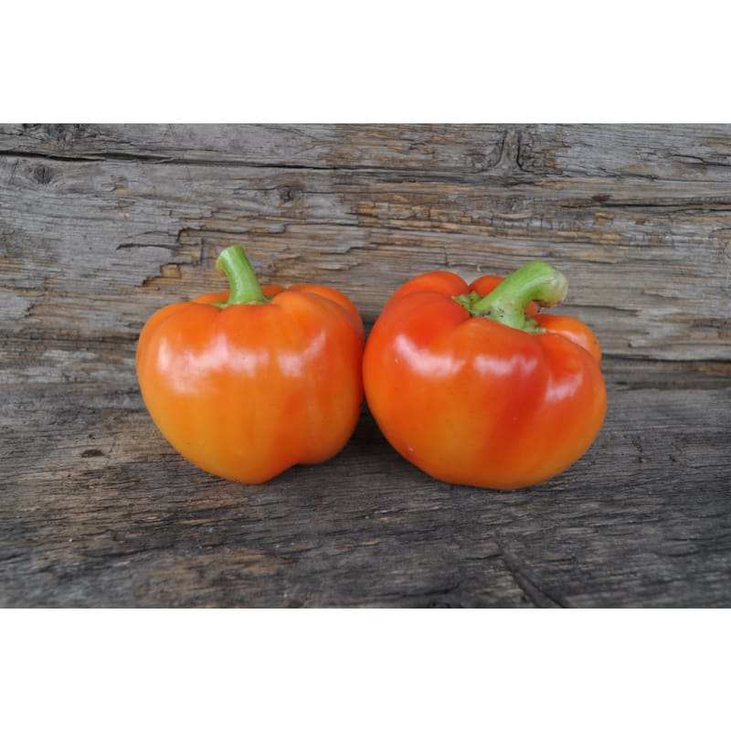 Alma Paprika Pepper (70 Days)