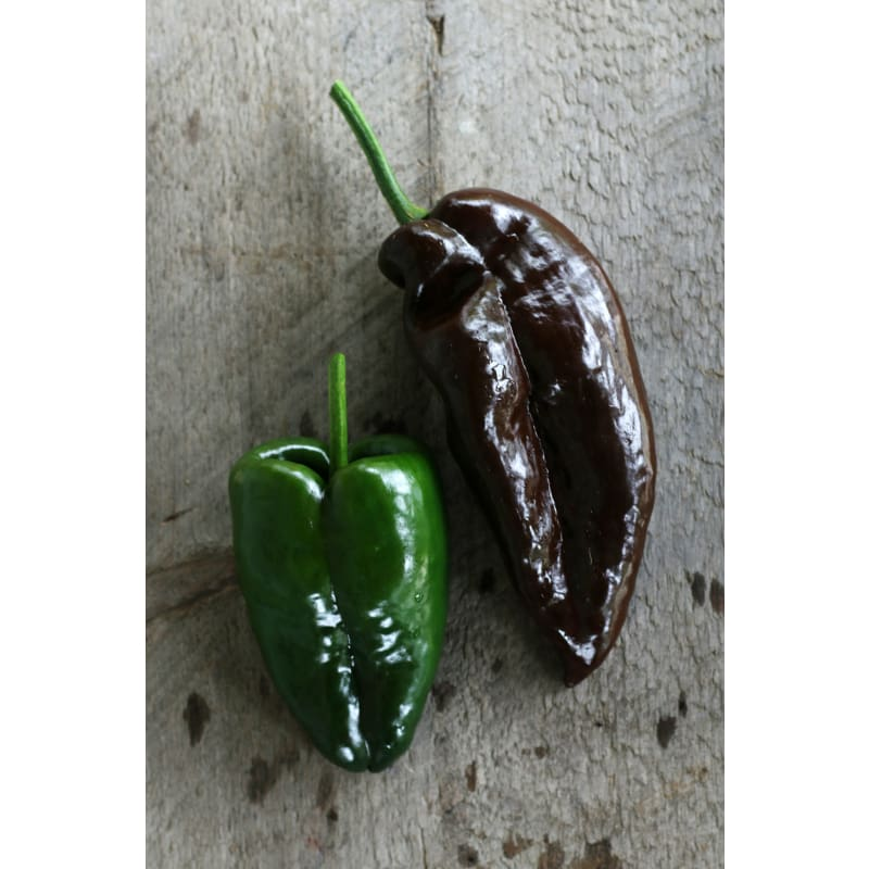 Ancho Hot Pepper (Heirloom, 80 Days)