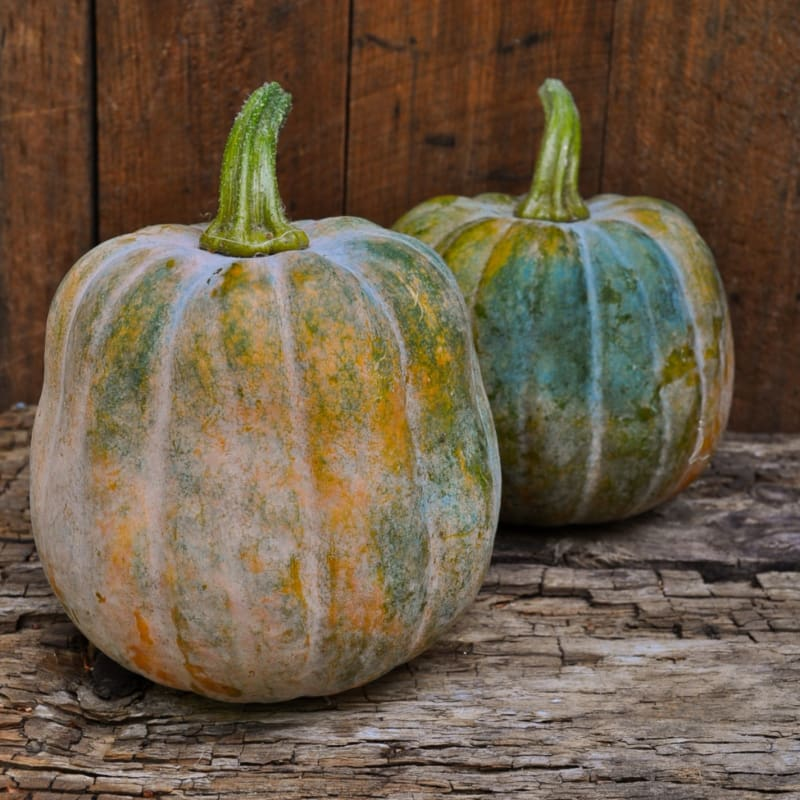 Autumn Frost Winter Squash (F1 Hybrid 100-105 Days)