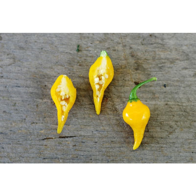 Biquinho Yellow Pepper (55 Days) - Vegetables
