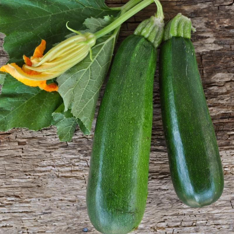 Black Beauty Zucchini (Heirloom 55 Days) - Vegetables