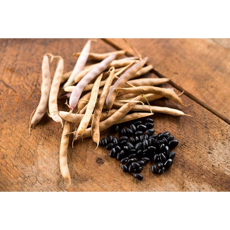 Black Turtle Bush Dried Bean (100 days)