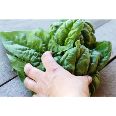 Bloomsdale Long Standing Spinach (Heirloom 42 Days) - Vegetables