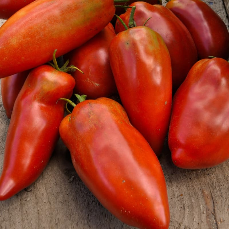 Blue Beech Tomato (Organic 85 Days) - Vegetables